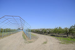 Steel gazebo for grapes over the road in the apple orchard. Fruit garden.  Stock Photography