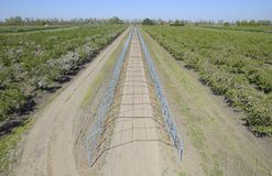 Steel gazebo for grapes over the road in the apple orchard. Frui. T garden Stock Image