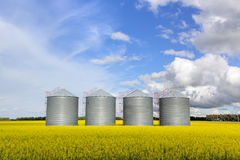 Steel grain bins. In a canola field Stock Photo