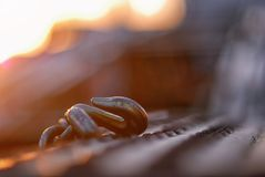 Early morning image of a hook on the back of a vehicle transporter. royalty free stock image