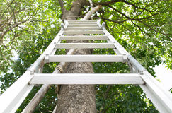 Steel ladder Stock Photography