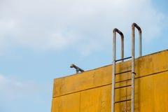 Steel ladder Stock Image