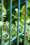 Vegetation. Steel panel and lock vegetation Royalty Free Stock Photos