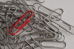 Steel paper clips with a single red paperclip Stock Images