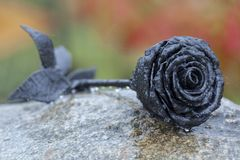 Steel rose on the stone in drops of rain royalty free stock photos