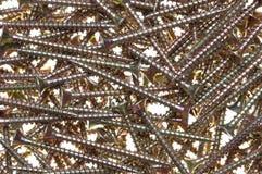 Steel screws for wood Royalty Free Stock Image