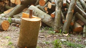 A steel wedge in a log. Splitting log with a wedge stock video