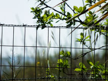 Steel wire fence Royalty Free Stock Image