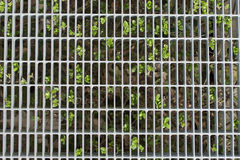 Steel wire mesh fence in front of a green shrub. Steel wire mesh fence in front of a leafy green shrub marking a perimeter or boundary in a safety and security Royalty Free Stock Photos