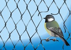 Steel wired wall texture and bird Royalty Free Stock Image