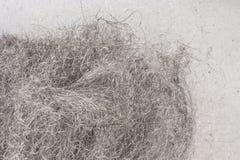 Steel wool. On steel plate, fibers Stock Image