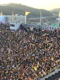 Steelers fan! Zdjęcie Stock