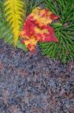 In steen Royalty-vrije Stock Afbeeldingen