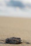 Steen bij sea-shore Royalty-vrije Stock Afbeeldingen