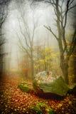 Steen, bomen en mist Royalty-vrije Stock Foto's