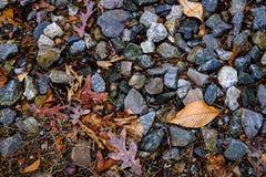 Steen en bladachtergrond Stock Fotografie