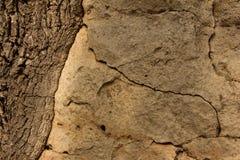 Steen en boom Stock Afbeeldingen