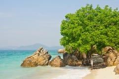 Steen en boom door het overzees Stock Fotografie