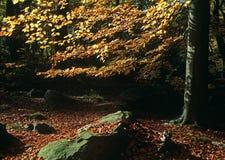 Steen en de herfstbeuk Royalty-vrije Stock Foto's