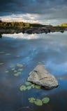 Steen en lilys in het meer Stock Foto