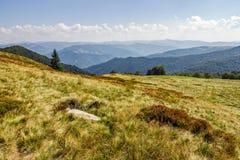 Steen en nette boom op een grasrijke weide van de bergrand Stock Foto's