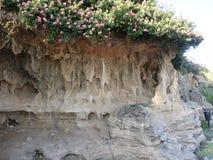 Steen en zandberg met sandflowers stock afbeeldingen