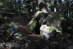 Steen in het bos Stock Afbeelding
