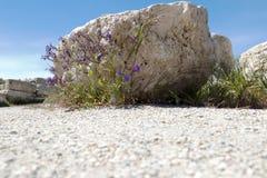 Steen met bloemen van Chersonesos stock foto's