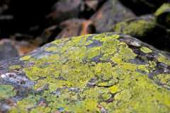 Steen met mos en korstmos wordt behandeld dat stock foto