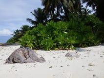 Steen op het strand Stock Afbeeldingen