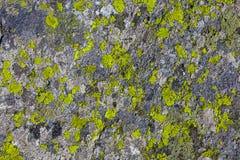 Steen of rots met de textuur van de mosinstallatie stock foto's