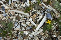 Steenachtig strand Royalty-vrije Stock Foto's