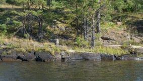 Steenachtige bank van de rivier met zeldzame bomen Royalty-vrije Stock Afbeelding
