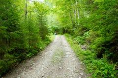 Steenachtige landweg in bergen - de Oekraïne Stock Afbeelding