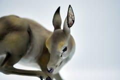 Steenbeeldje van herten Stock Foto's