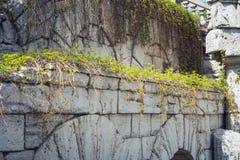 Steenbogen met een wijnstok van wilde druiven met jonge bladeren worden gevlecht dat Stock Foto