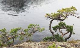 Steenheuvel met de eenzame pijnboom Royalty-vrije Stock Afbeelding