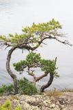 Steenheuvel met de eenzame pijnboom Stock Foto's