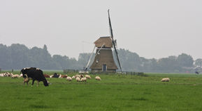 Steenhuister młyn blisko Stiens holandie Zdjęcie Royalty Free