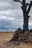 Steenkool Stock Afbeelding