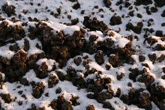 Steenkoollaag Stock Foto's