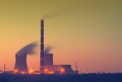 Steenkoolmacht plant_V Stock Afbeeldingen