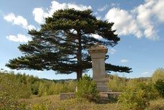 Steenmonument met pijnboom Stock Afbeeldingen