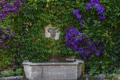 Steenmuur en fontein met wijnstokken en purpere bloemen wordt behandeld die royalty-vrije stock fotografie