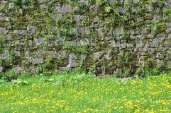 Steenmuur en groen gras Royalty-vrije Stock Foto's