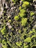 Steenmuur in Groen mos royalty-vrije stock afbeeldingen