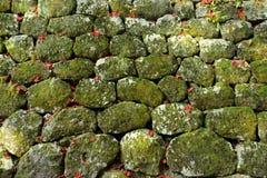 Steenmuur met geweven mos Royalty-vrije Stock Foto