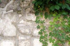 Steenmuur met Groen Textuur van aard Achtergrond voor tekst, banner, etiket Stock Afbeelding
