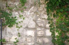 Steenmuur met Groen Textuur van aard Achtergrond voor tekst, banner, etiket Stock Fotografie