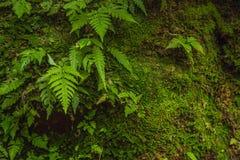 Steenmuur met mos en varens als achtergrond wordt behandeld die royalty-vrije stock afbeeldingen